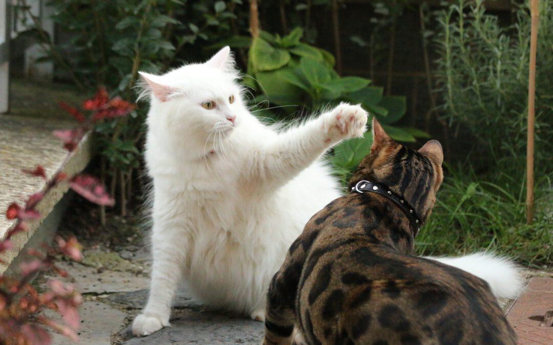 O nabručené kočce Pepině