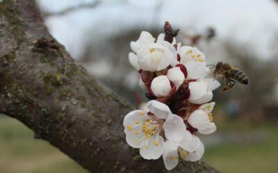 Jarní skoro karanténa (na sklonku března 2020)