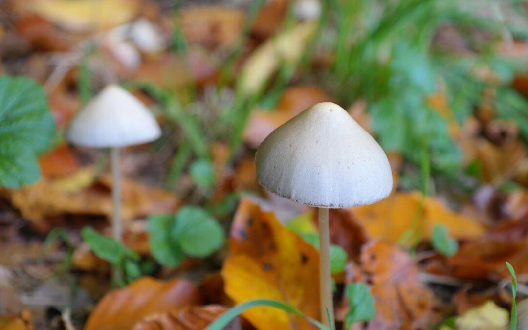 Standova houbařská sezóna